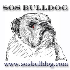 Etalon chiot élevage Staffordhire Bull Terrier staffie Knightwood Oak Celtic Oak Chiens de france club Staffordshire Bull Terrier de France FABAS http://www.stamtavler.com/dogarchive/ dessin energetiq