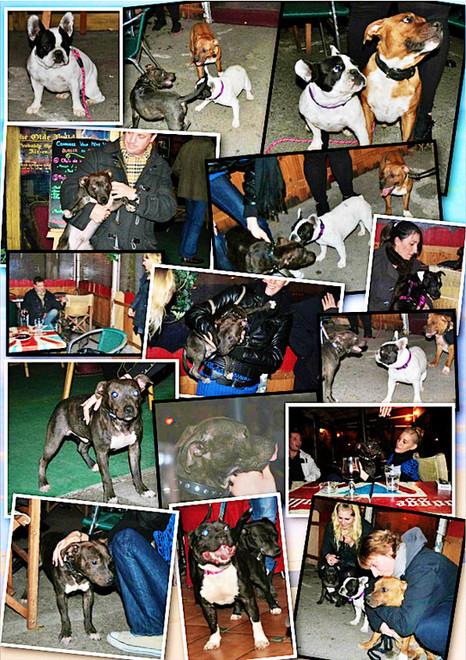 Rencontre Staffordshire Bull Terrier - Aix en Provence - Janvier 2012 - Bulldogge & Barrister